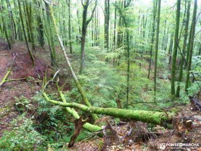 Valle del Baztán_Navarra; valle de irati tejera almeria cabo de gata excursión chorreras de despe?
